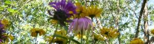 cropped-my-flowers.jpg