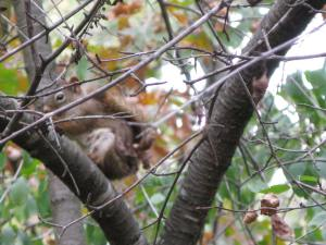 Squirrel outside my camper.
